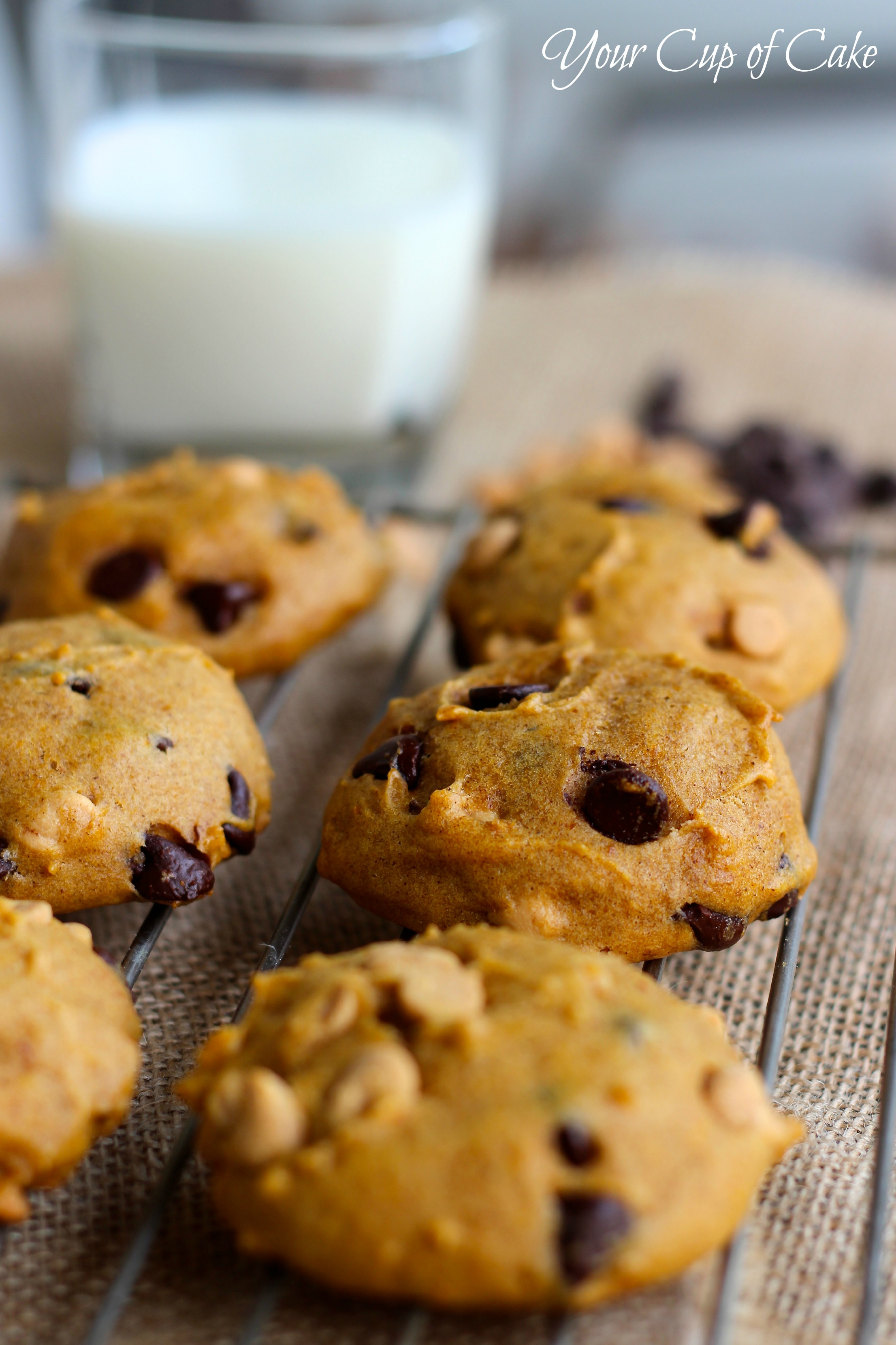 Joy Of Baking Pumpkin Chocolate Chip Cookies